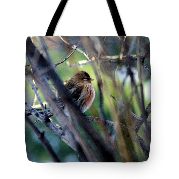 Red Poll, Resting Tote Bag