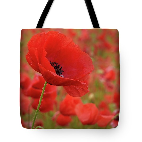 Red Poppies 3 Tote Bag