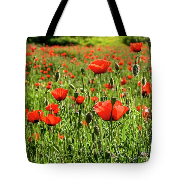 red poppies flower and seeds Israel Tote Bag