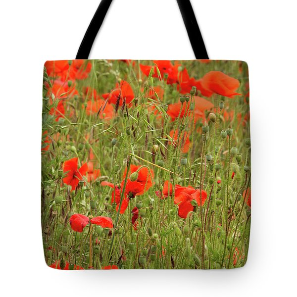 Red Poppies Tote Bag by Wayne Molyneux