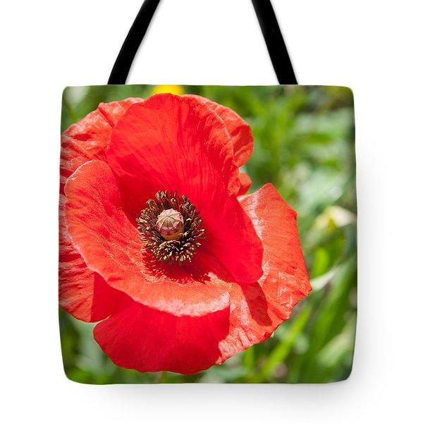 Red Poppy Flower Head Tote Bag