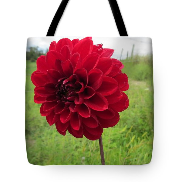 Red, Red, Red Tote Bag