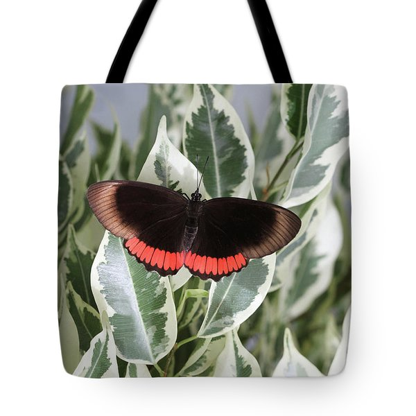 Red Rim Butterfly Tote Bag