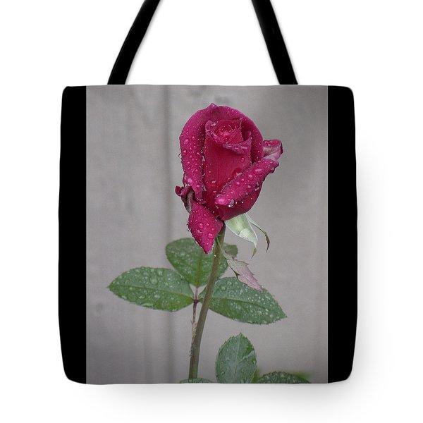 Red Rose In Rain Tote Bag