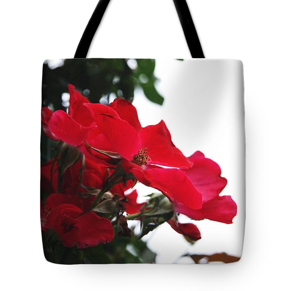 Red Roses Trio Tote Bag