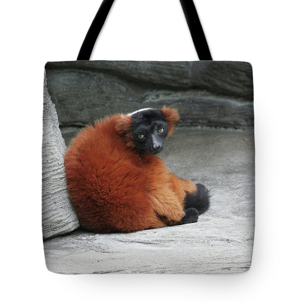 Red Ruffed Lemur Tote Bag