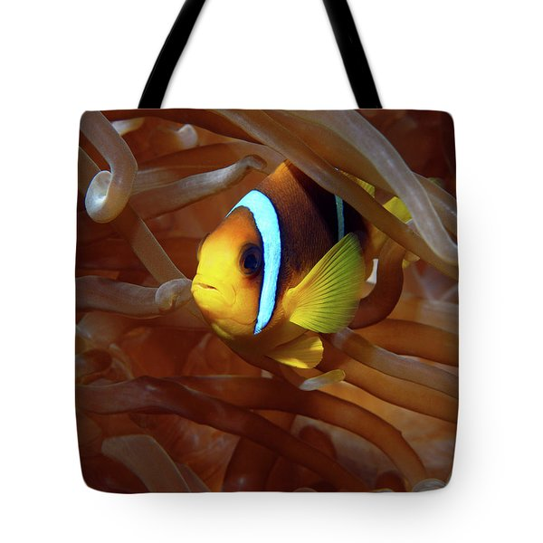 Red Sea Clownfish, Eilat, Israel 8 Tote Bag