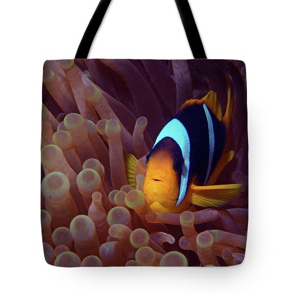 Red Sea Clownfish, Eilat, Israel 9 Tote Bag