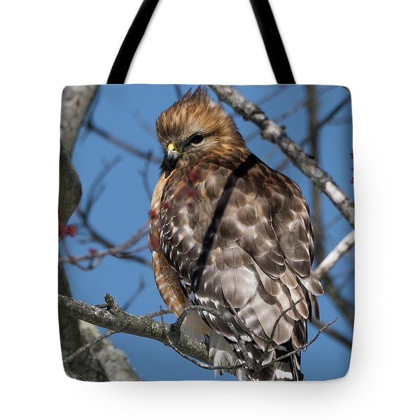 Tote Bag featuring the photograph Red Shouldered Hawk 2017 by Bill Wakeley