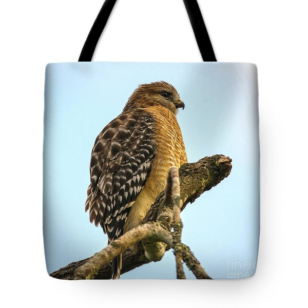Red-shouldered Hawk - Buteo Lineatus Tote Bag