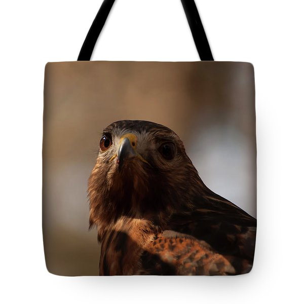 Red Shouldered Hawk Close Up Tote Bag by Chris Flees