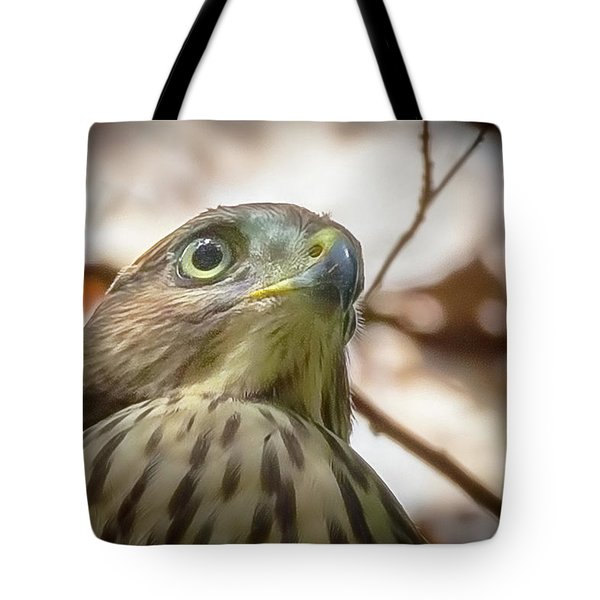 Red-shouldered Hawk Fledgling 3 Tote Bag