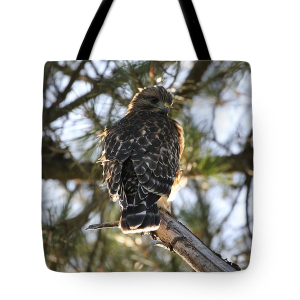Red Shouldered Hawk Fledgling Tote Bag