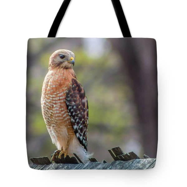 Tote Bag featuring the photograph Red-shouldered Hawk by Lynne Jenkins