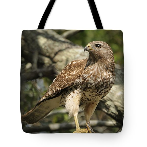 Tote Bag featuring the photograph Red Shouldered Hawk With Prey by Bradford Martin