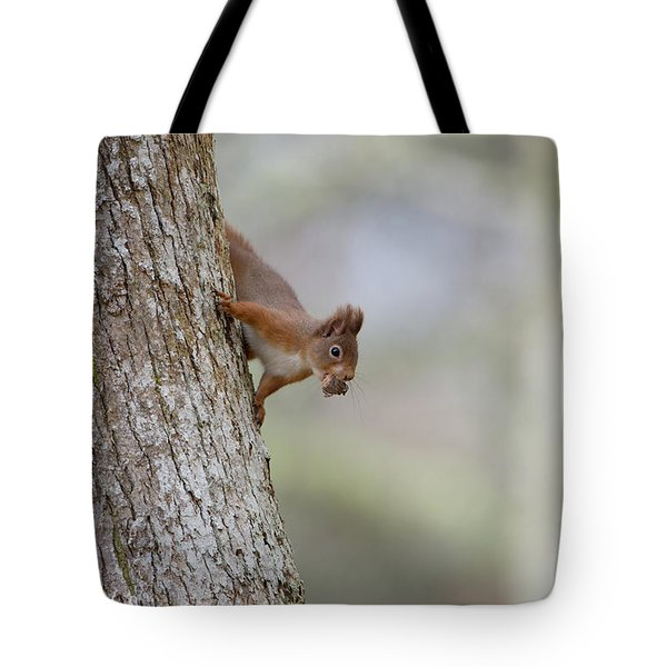 Red Squirrel Climbing Down A Tree Tote Bag
