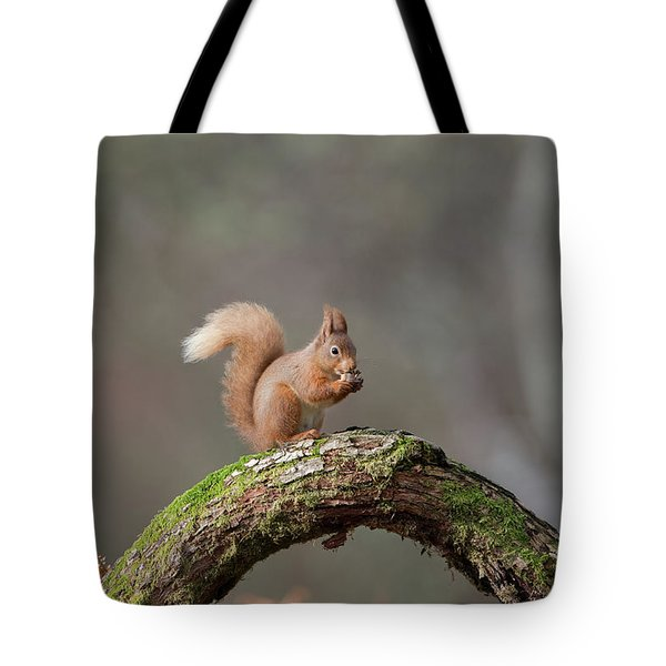 Red Squirrel Eating A Hazelnut Tote Bag
