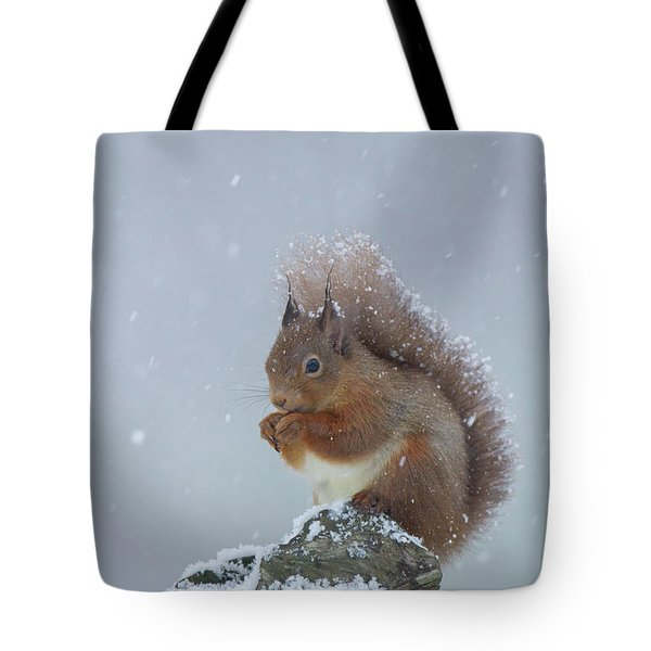 Red Squirrel In A Blizzard Tote Bag