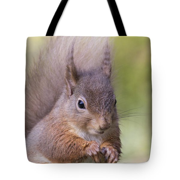Red Squirrel - Scottish Highlands #1 Tote Bag