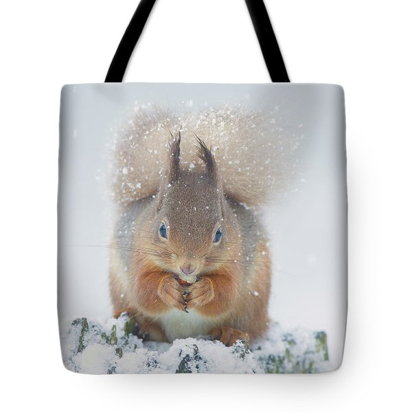 Red Squirrel Nibbles A Nut In The Snow Tote Bag