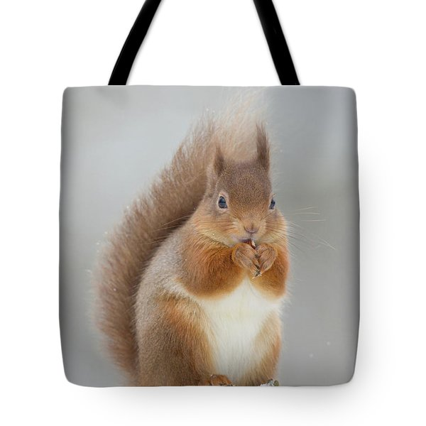 Red Squirrel Nibbling A Hazelnut In The Snow Tote Bag
