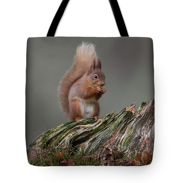 Red Squirrel Nibbling A Nut Tote Bag