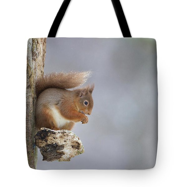 Red Squirrel On Tree Fungus Tote Bag