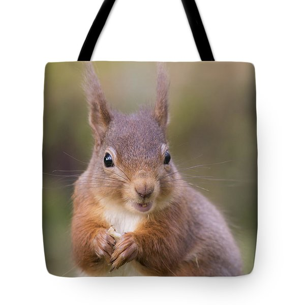 Red Squirrel - Scottish Highlands #18 Tote Bag