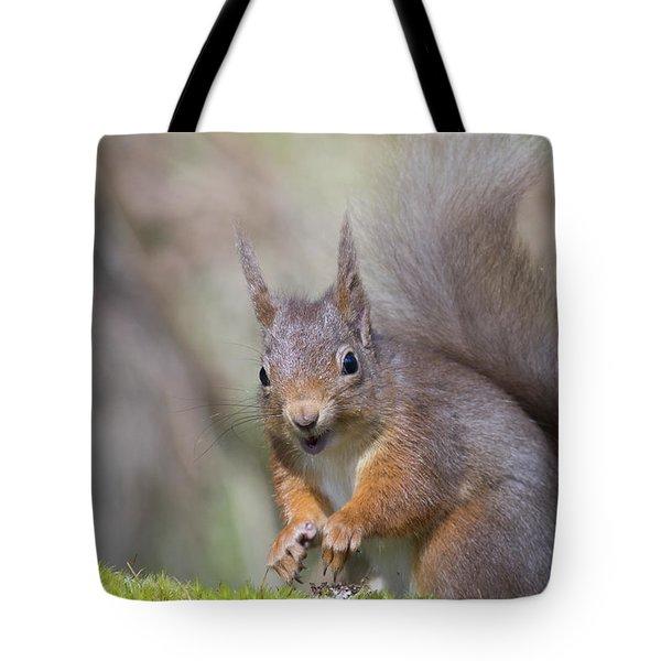 Red Squirrel - Scottish Highlands #26 Tote Bag