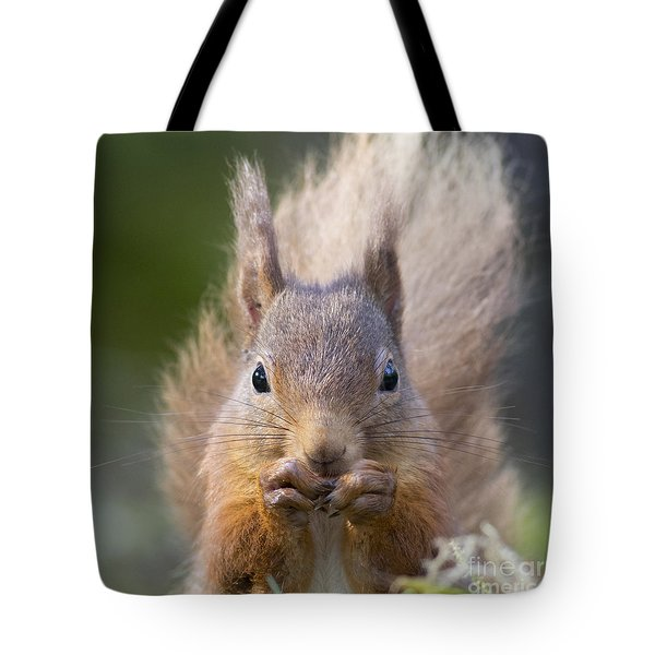 Red Squirrel - Scottish Highlands #28 Tote Bag