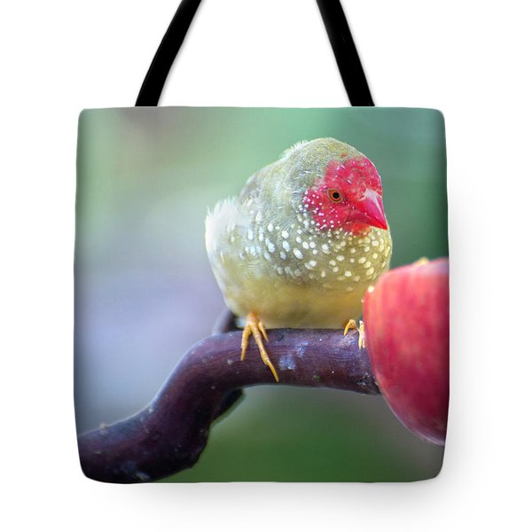 Red Star Finch Tote Bag
