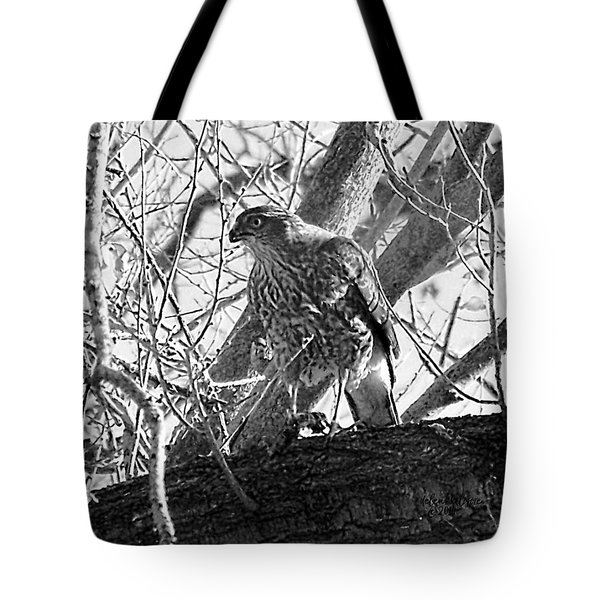 Red Tail Hawk In Black And White Tote Bag