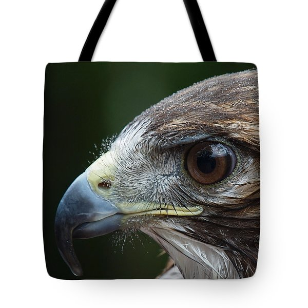 Red Tail Hawk Misted Tote Bag by Peter Gray
