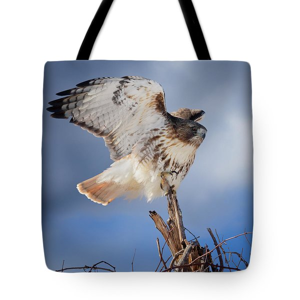 Tote Bag featuring the photograph Red Tail Hawk Perch by Bill Wakeley