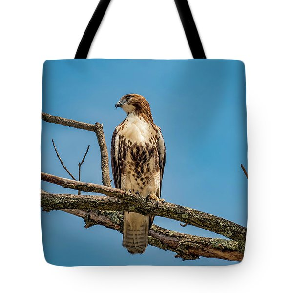 Red Tail Hawk Perched Tote Bag