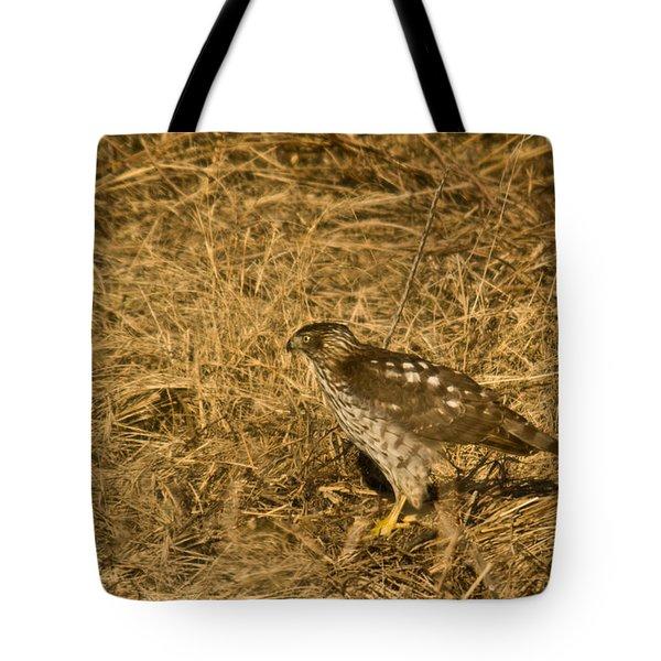 Red Tail Hawk Walking Tote Bag by Douglas Barnett