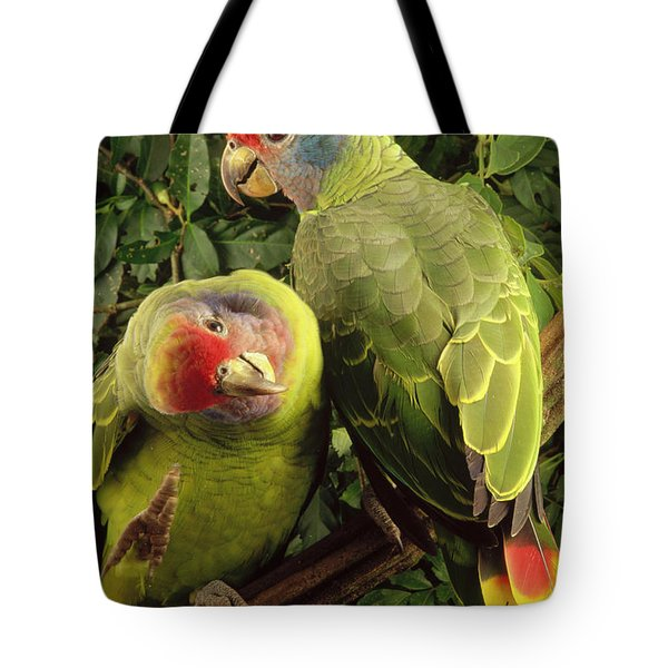 Red-tailed Amazon Amazona Brasiliensis Tote Bag by Claus Meyer