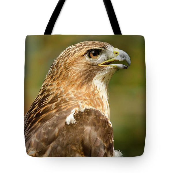 Red-tailed Hawk Close-up Tote Bag by Ann Bridges