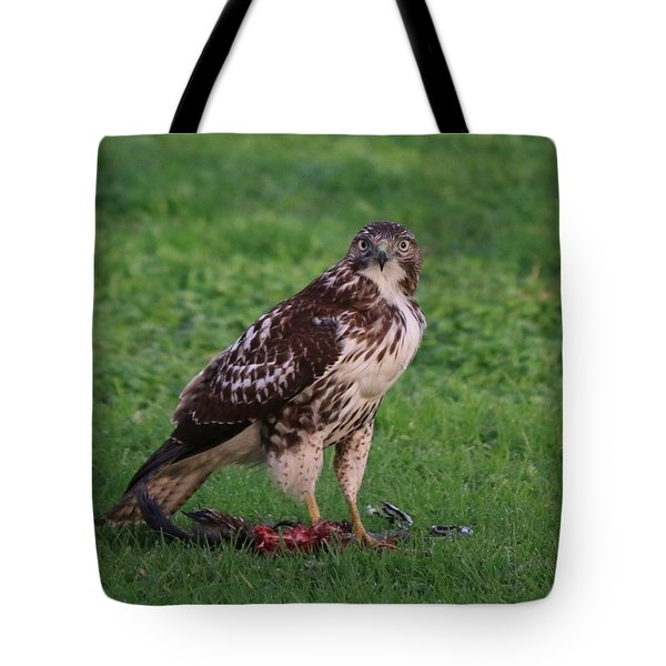 Red-tailed Hawk Eating Dinner - 2 Tote Bag by Christy Pooschke