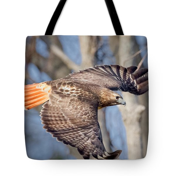 Tote Bag featuring the photograph Red Tailed Hawk Flying by Bill Wakeley