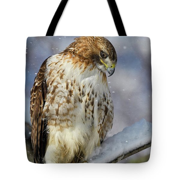 Tote Bag featuring the photograph Red Tailed Hawk, Glamour Pose by Michael Hubley
