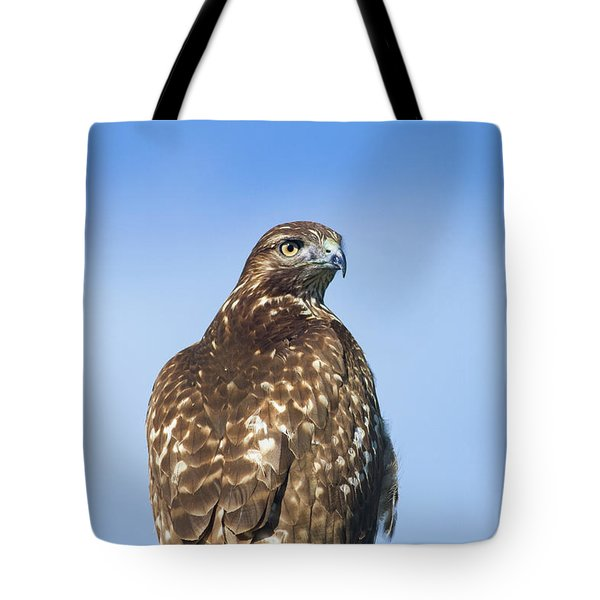 Red-tailed Hawk Perched Looking Back Over Shoulder Tote Bag
