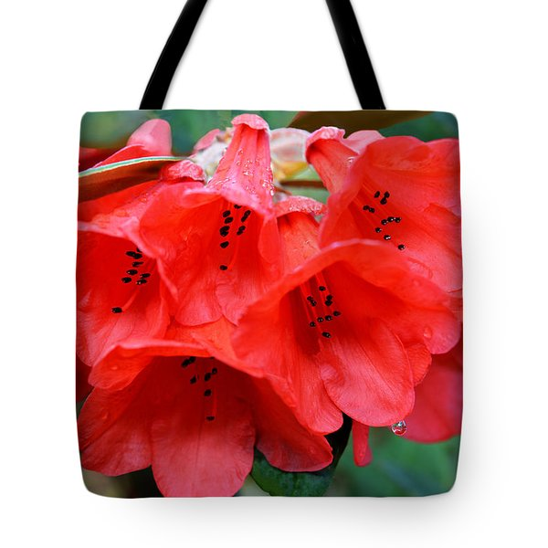 Red Trumpet Rhodies Tote Bag