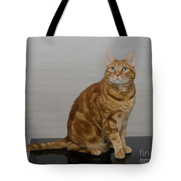 Red Tubby Cat Tabasco On Black Table Tote Bag