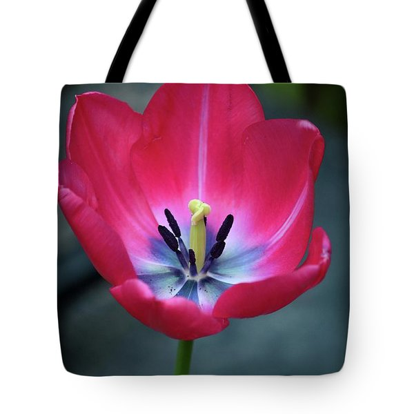 Red Tulip Blossom With Stamen And Petals And Pistil Tote Bag