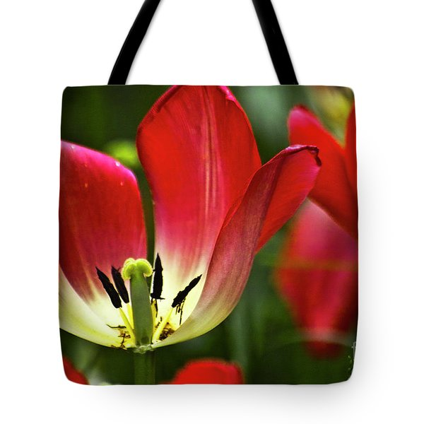 Red Tulips Petals Tote Bag by Heiko Koehrer-Wagner