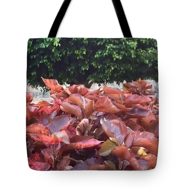 Tote Bag featuring the photograph Red Under The Tree by Cindy Charles Ouellette