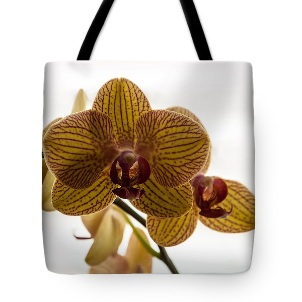 Tote Bag featuring the photograph Red Veined Orchid by Kirt Tisdale