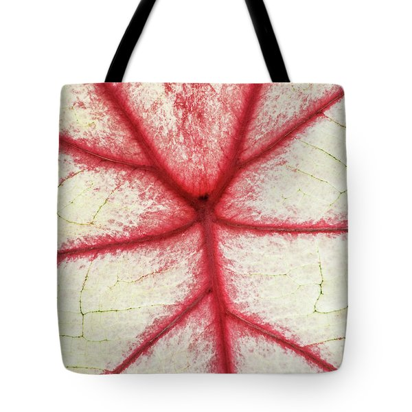 Red Veins Of A Coleus Plant Tote Bag