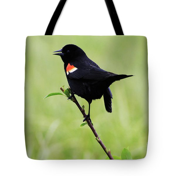 Tote Bag featuring the photograph Red Winged Blackbird by Alyce Taylor